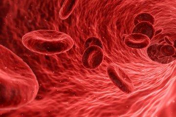 Vénás trombózis- több típusa ismert